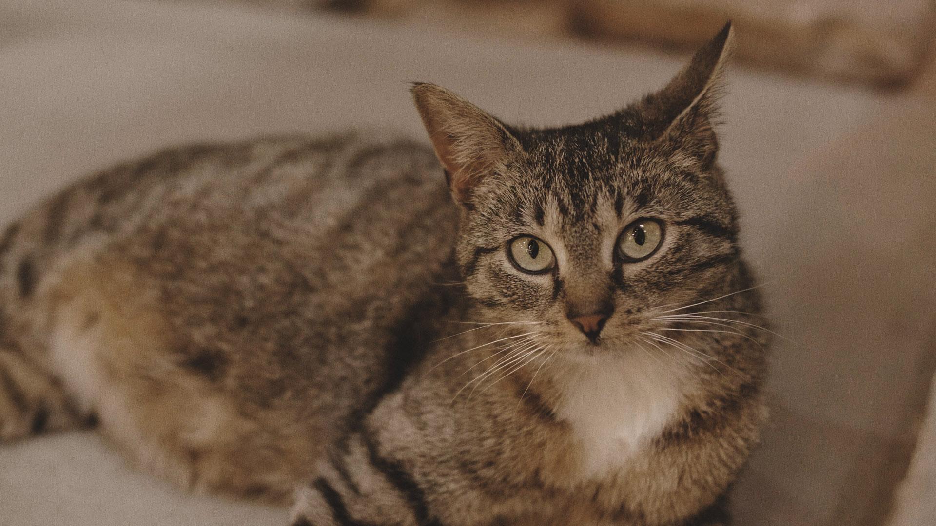 27 Kot z Folwarku Wąsowo