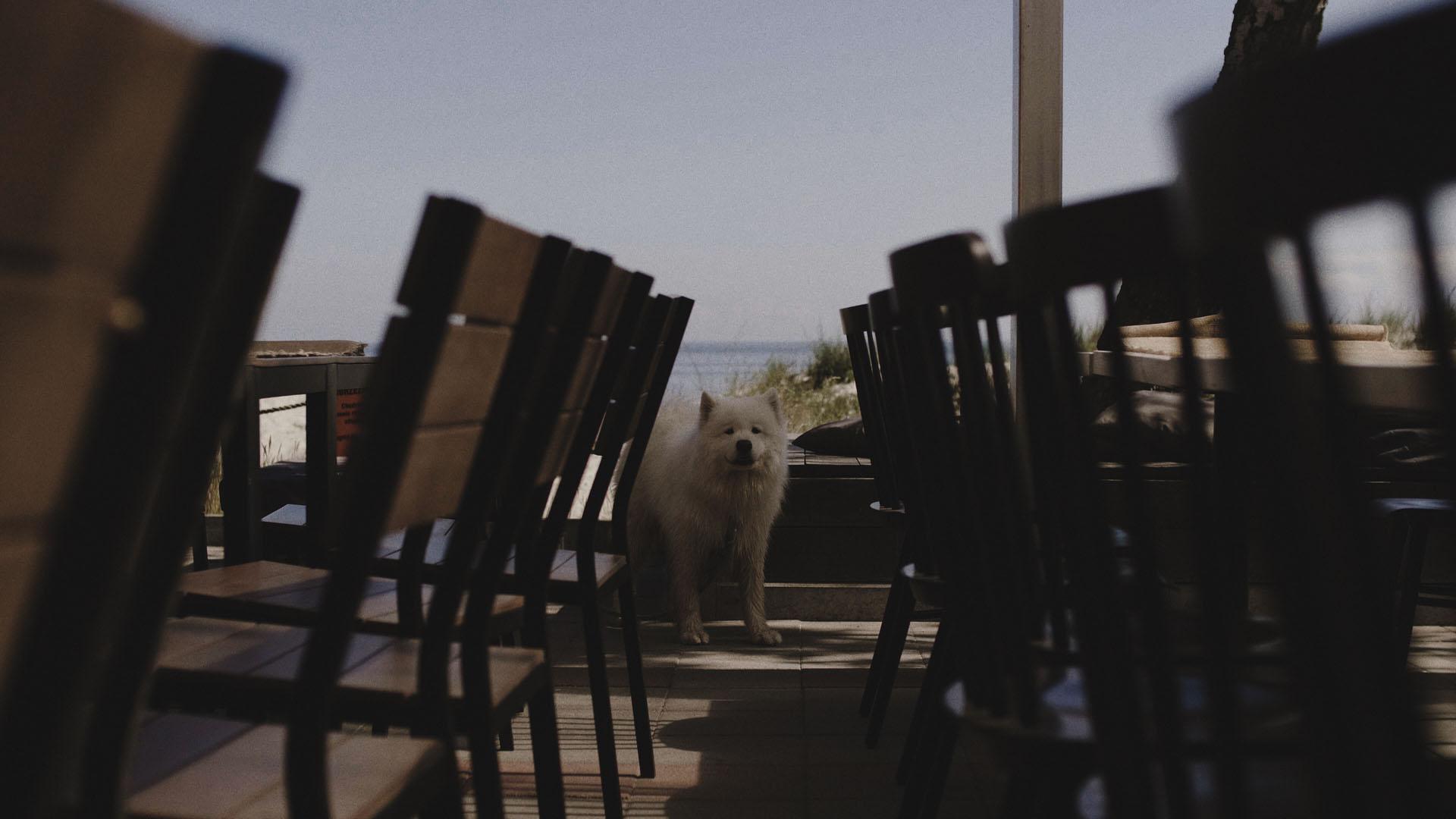 12 rettungs budy pies na ślubie jastarnia