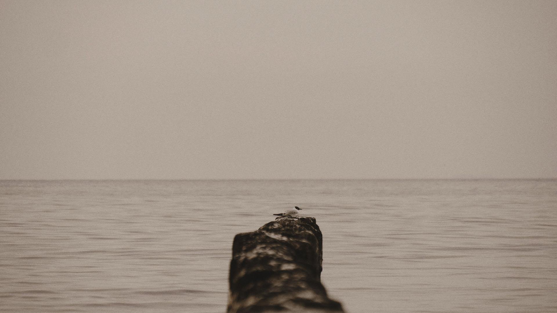 6 sesja ślubna mewa ślub nad morzem