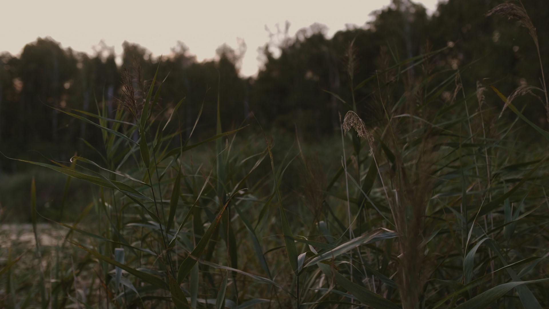 10 jezioro film ślubny